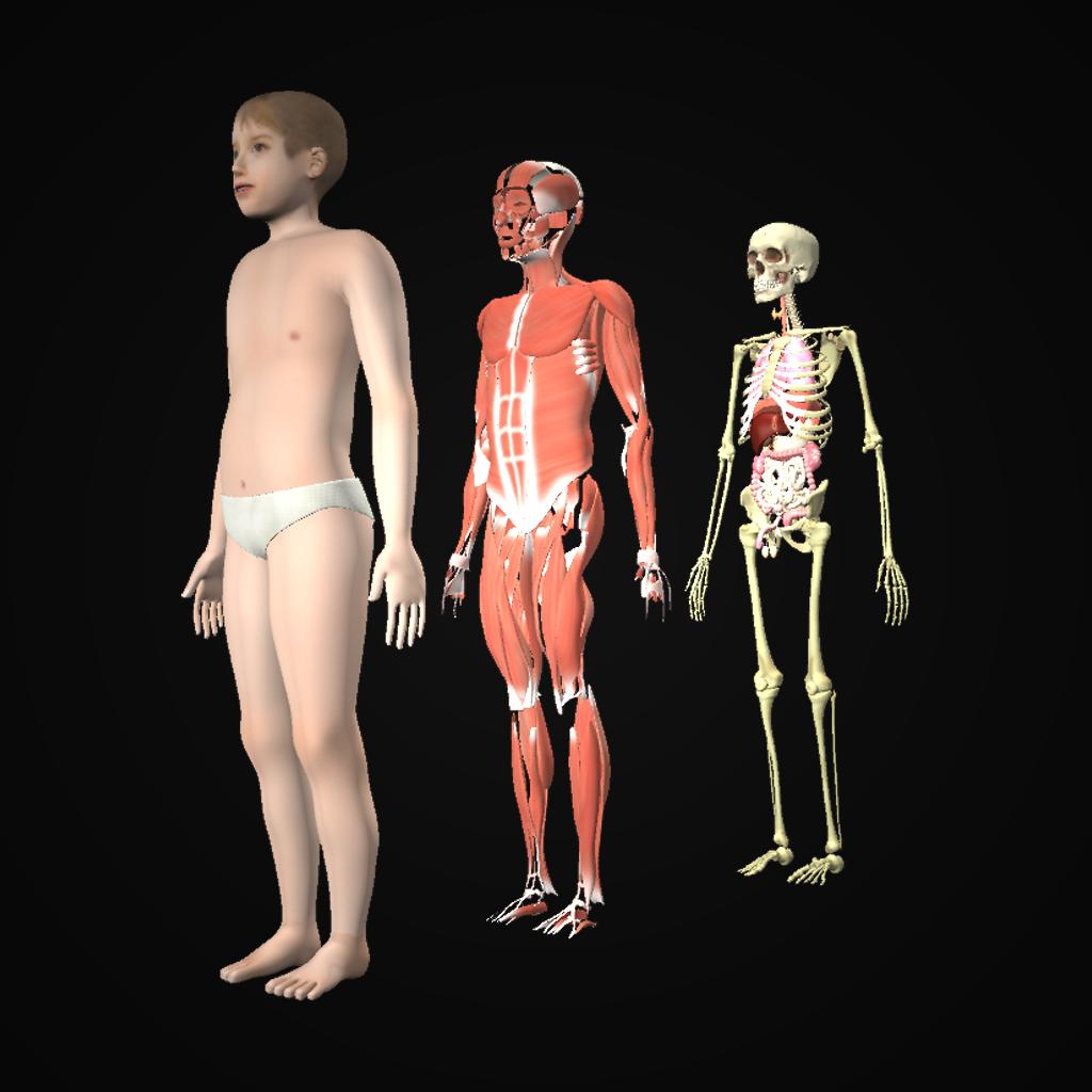 Drill Down Child Anatomy - GetApplr